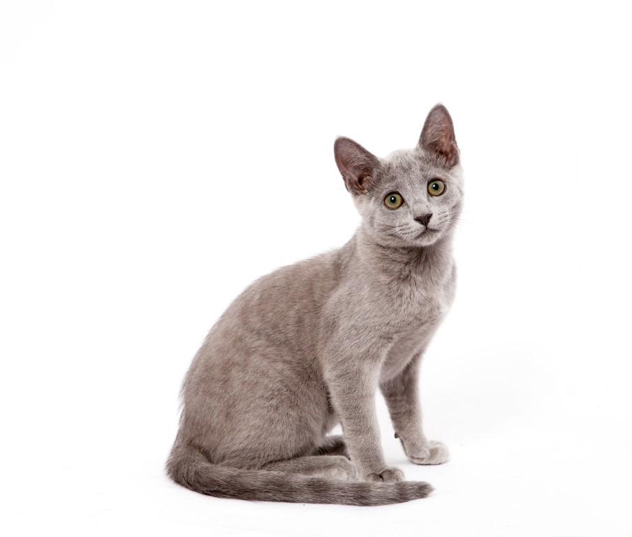 Породы маленьких котят с фото и названием
