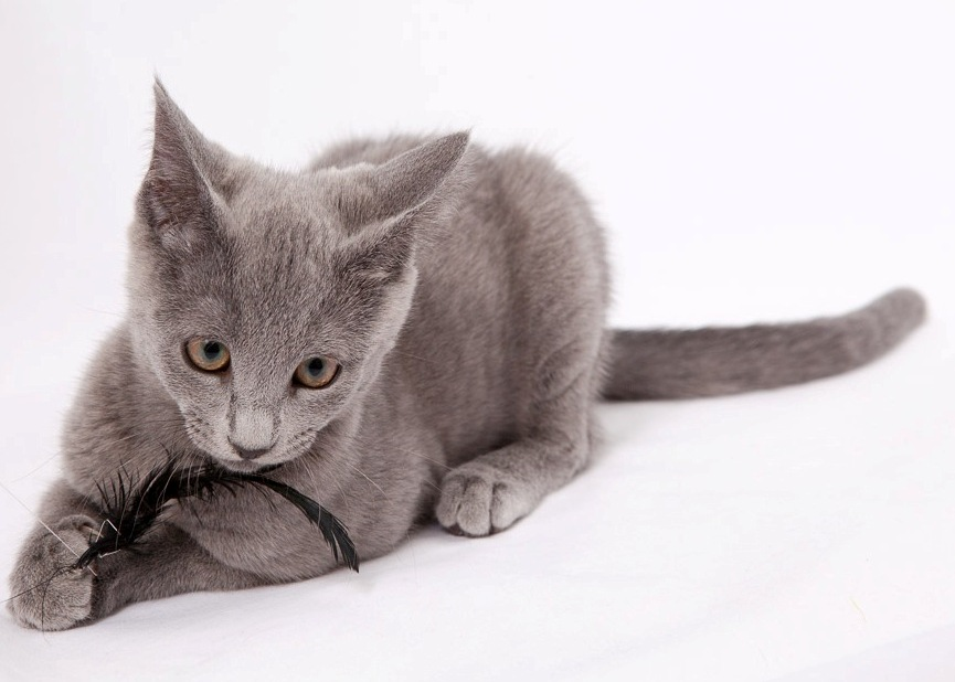 купить русскую голубую кошку в москве, русская голубая кошка купить, купить котенка русской голубой, русская голубая купить, русская голубая кошка купить в спб, русская голубая кошка купить в минске, русская голубая кошка купить в минске, купить котенка русская голубая в москве, купить котенка русского голубого в спб, русская голубая кошка купить в беларуси, русская голубая кошка купить в беларуси, купить котенка русская голубая в санкт петербурге,  кот русская голубая купить, русская голубая купить москва, купить голубую русскую кошку в орле, русская голубая кошка купить, котята породы русская голубая купить, русская голубая купить в самаре, русская голубая кошка купить в казани,  где купить котенка русской голубой в белгороде, где в казани купить котенка русской голубой, русская голубая купить беларусь, русская голубая купить красноярск, русская голубая купить, русская голубая купить беларусь, русская голубая кошка цена купить, русская голубая кошка купить в москве питомник, русская голубая купить екатеринбург, где купить русская голубая кошка, купить котенка русской голубой,  русская голубая кошка купить украина, купить кота русской голубой, русская голубая купить спб, русская голубая кошка купить киев, купить русскую голубую минск, купить в питомнике русскую голубую кошку, русская голубая купить киев, продажа русских голубых кошечек,  продажа котят русских голубых, продажа русской голубой, продажи русских голубых кошек, продам русскую голубую кошку, продам котенка русской голубой, русская голубая продам, русская голубая кошка купить в минске, русская голубая минск, котята русская голубая минск, купить русскую голубую минск, русская голубая кошка купить в беларуси,  русская голубая купить беларусь, русская голубая беларусь, русская голубая гомель