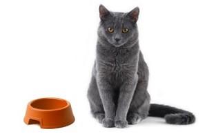 чем кормить русскую голубую кошку, чем кормить русскую голубую, корма для русских голубых кошек, чем кормить котенка русская голубая, корм для русской голубой, русская голубая питание, русская голубая кошка питание, русская голубая питание котят, русским голубым кошкам можно морковь