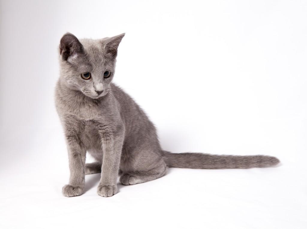 кошки в дар фото