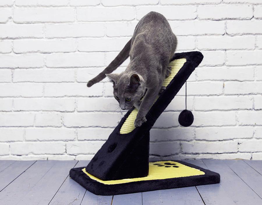 Русская голубая кошка: описание породы, характер, стандарт, особенности, уход, здоровье